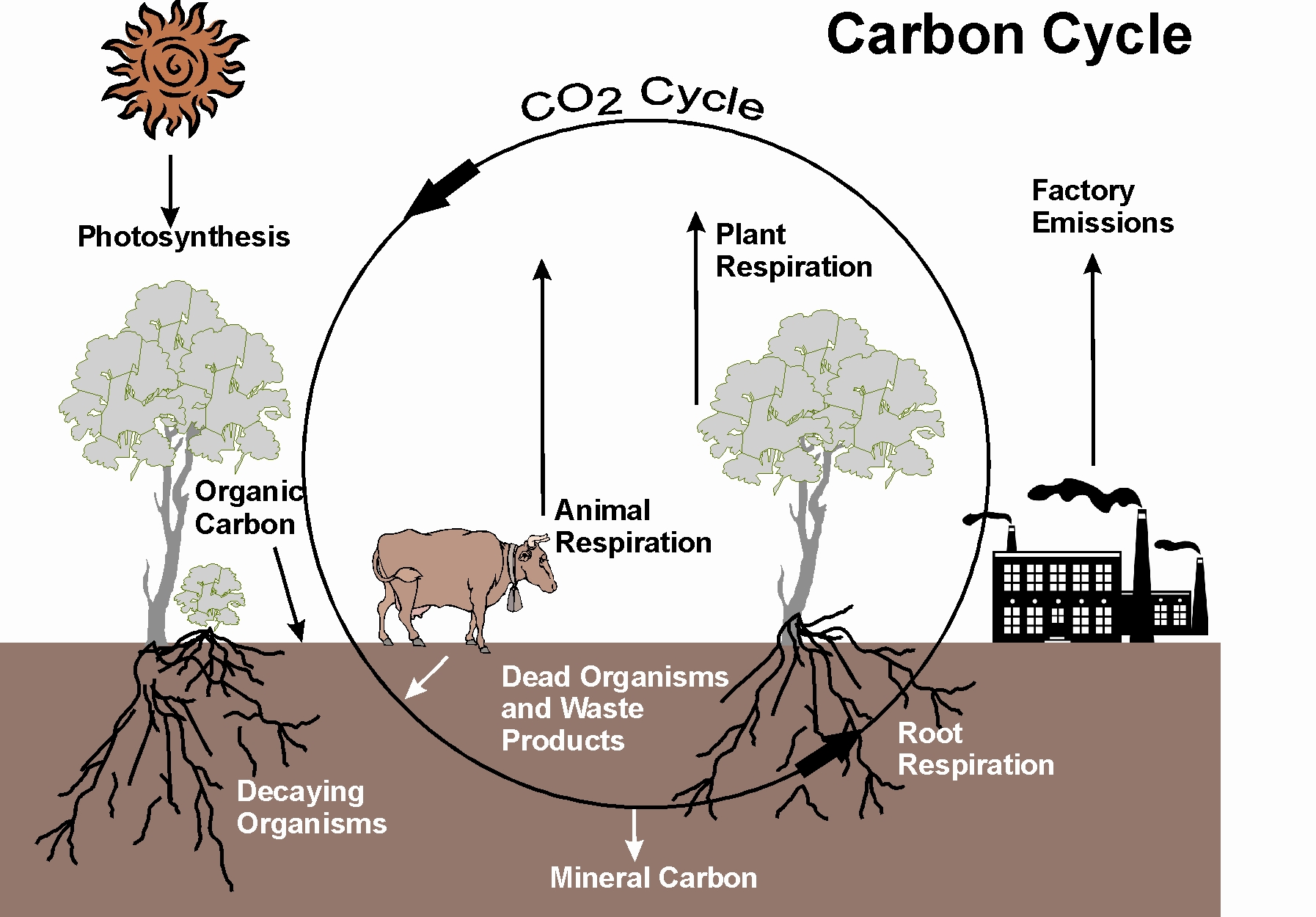 Carbon cycle essay nitrogen cycle essay pdf physics thesis ideas how the boring carbon cycle resilience the boring carbon cycle ccuart Gallery