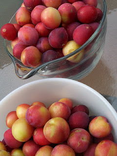 Plums ready for jam