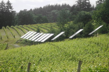 solar panels in vineyard
