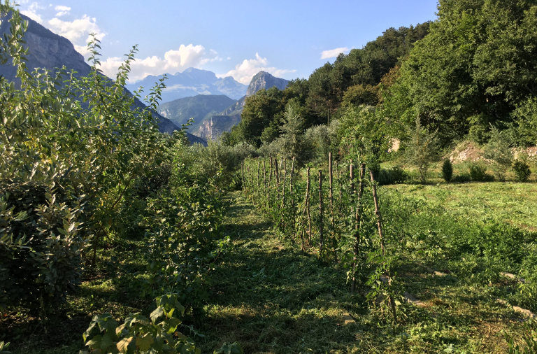 agroforestry in valley